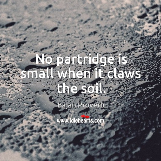 No partridge is small when it claws the soil. Bajan Proverbs Image
