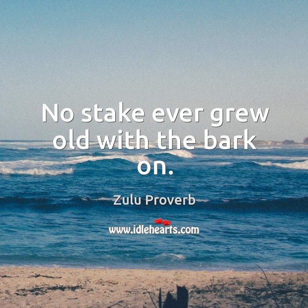 No stake ever grew old with the bark on. Zulu Proverbs Image