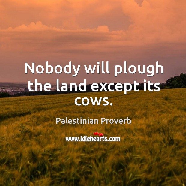 Nobody will plough the land except its cows. Palestinian Proverbs Image