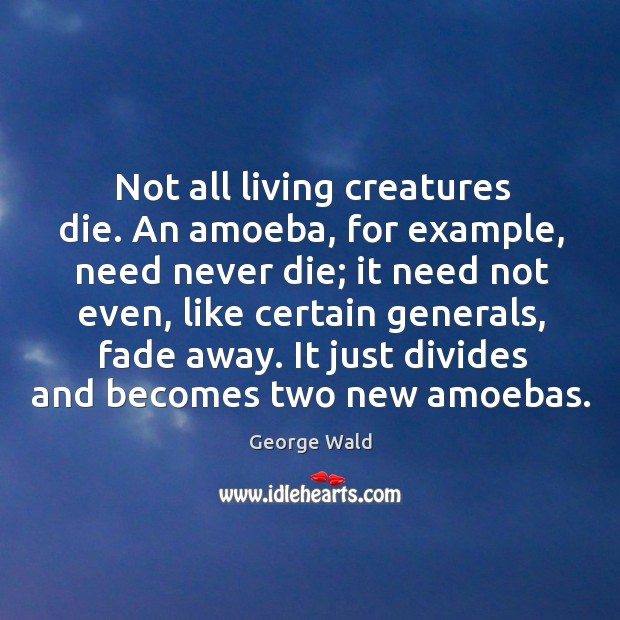 Image, Not all living creatures die. An amoeba, for example, need never die;