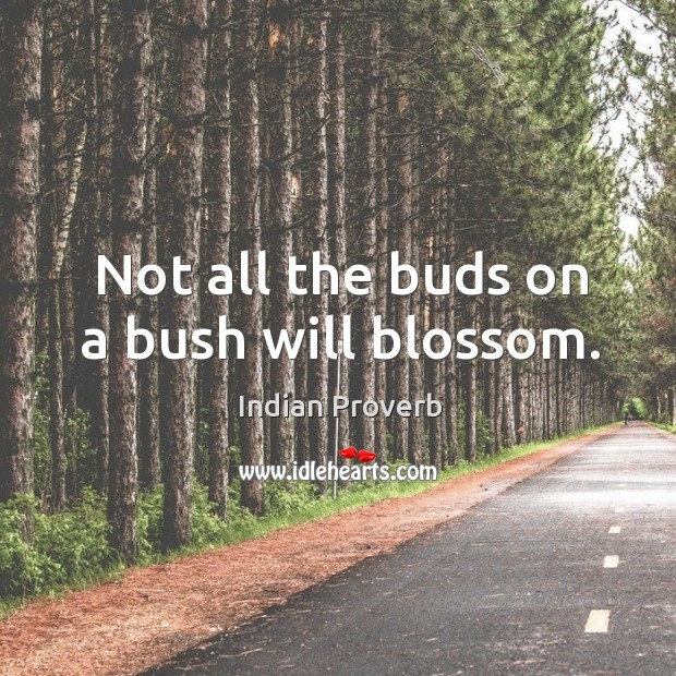 Not all the buds on a bush will blossom. Indian Proverbs Image