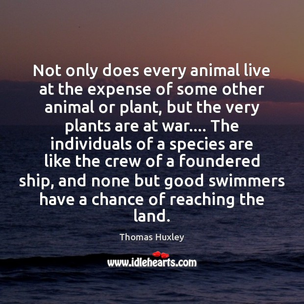 Image, Not only does every animal live at the expense of some other