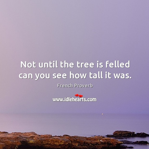 Image, Not until the tree is felled can you see how tall it was.