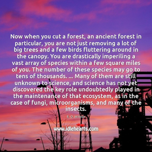 Now when you cut a forest, an ancient forest in particular, you E. O. Wilson Picture Quote