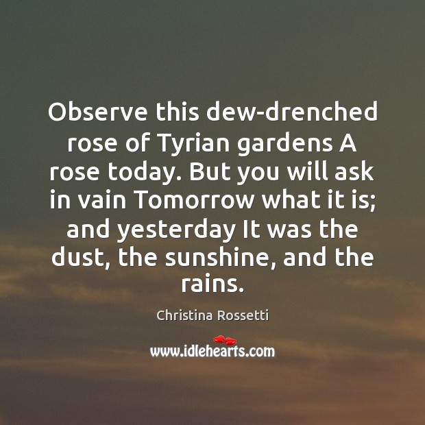 Observe this dew-drenched rose of Tyrian gardens A rose today. But you Christina Rossetti Picture Quote