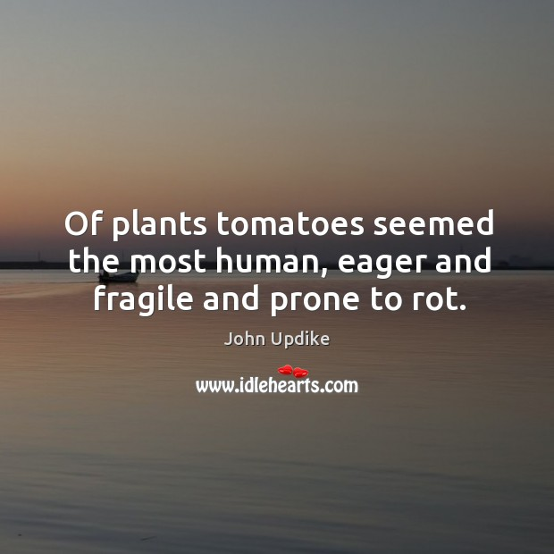 Image, Of plants tomatoes seemed the most human, eager and fragile and prone to rot.