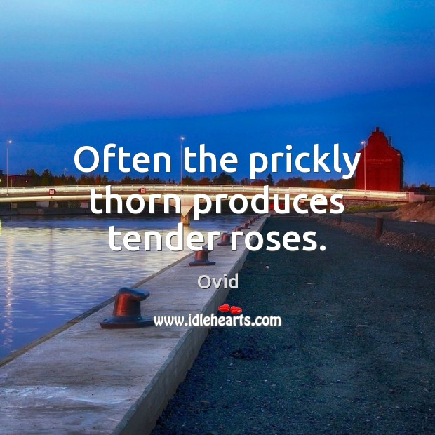 Often the prickly thorn produces tender roses. Ovid Picture Quote