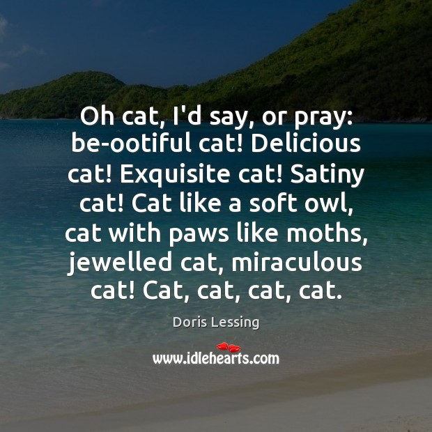 Oh cat, I'd say, or pray: be-ootiful cat! Delicious cat! Exquisite cat! Doris Lessing Picture Quote