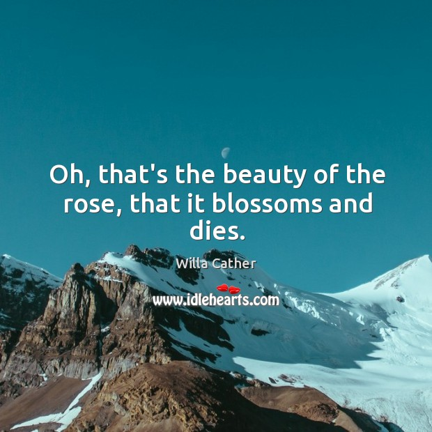 Oh, that's the beauty of the rose, that it blossoms and dies. Image