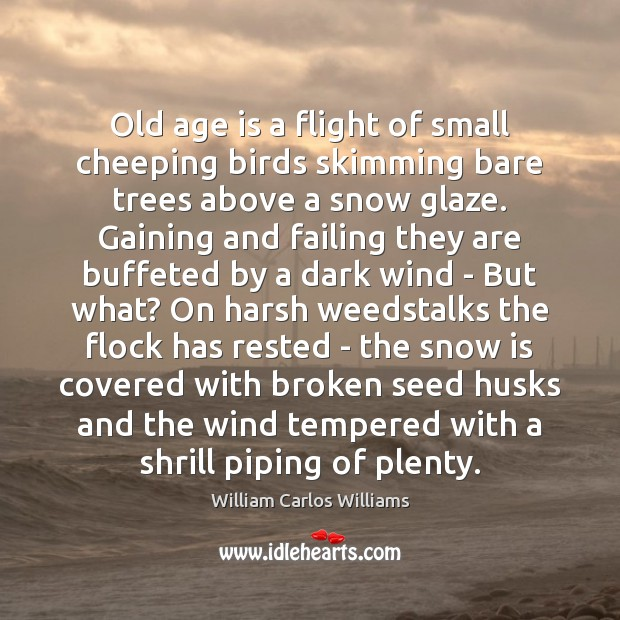 Old age is a flight of small cheeping birds skimming bare trees William Carlos Williams Picture Quote