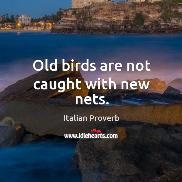 Image, Old birds are not caught with new nets.