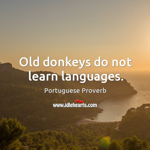 Image about Old donkeys do not learn languages.
