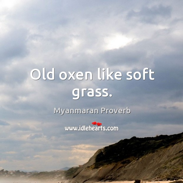 Old oxen like soft grass. Myanmaran Proverbs Image