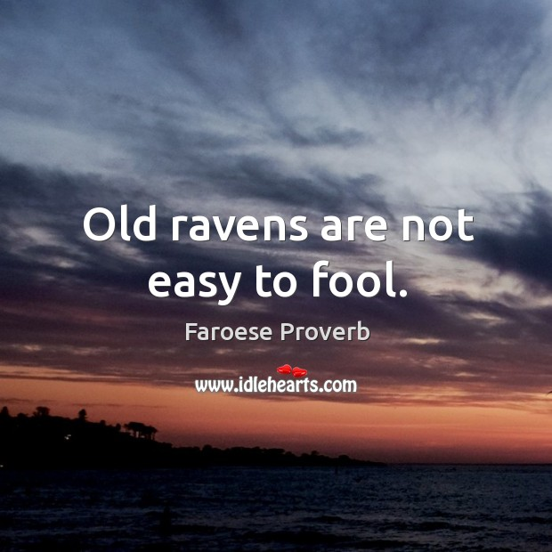 Image, Old ravens are not easy to fool.