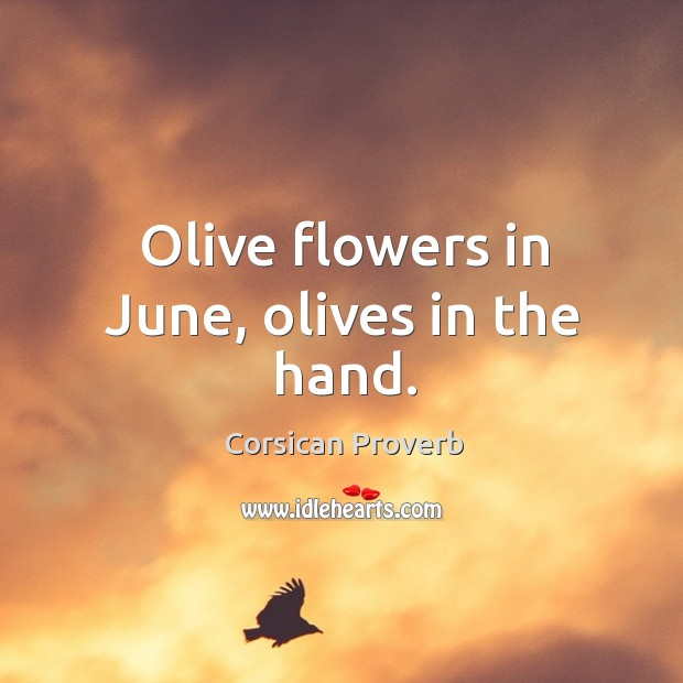 Olive flowers in june, olives in the hand. Corsican Proverbs Image
