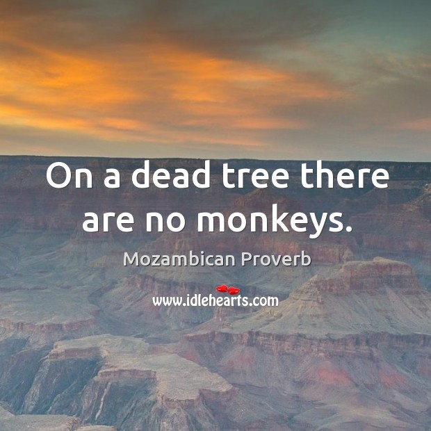 On a dead tree there are no monkeys. Mozambican Proverbs Image
