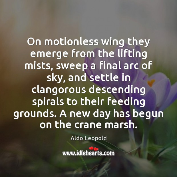 Image, On motionless wing they emerge from the lifting mists, sweep a final