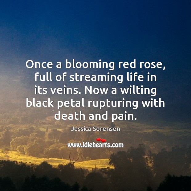 Once a blooming red rose, full of streaming life in its veins. Jessica Sorensen Picture Quote