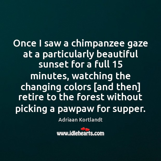 Image, Once I saw a chimpanzee gaze at a particularly beautiful sunset for