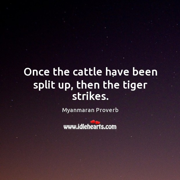 Once the cattle have been split up, then the tiger strikes. Myanmaran Proverbs Image
