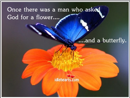Image, The butterfly and the flower