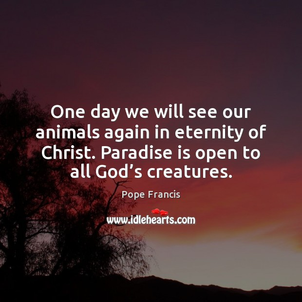 One day we will see our animals again in eternity of Christ. Pope Francis Picture Quote