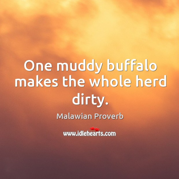 One muddy buffalo makes the whole herd dirty. Malawian Proverbs Image