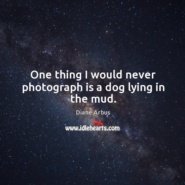 One thing I would never photograph is a dog lying in the mud. Image