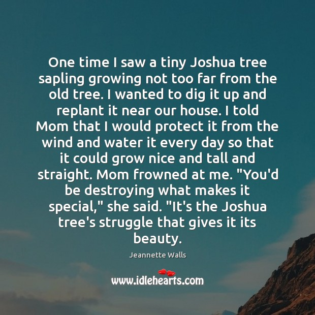 One time I saw a tiny Joshua tree sapling growing not too Jeannette Walls Picture Quote