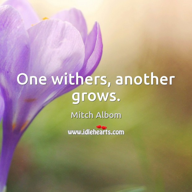 One withers, another grows. Mitch Albom Picture Quote