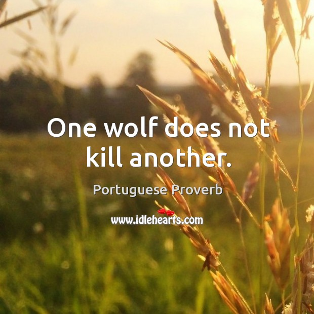 One wolf does not kill another. Image