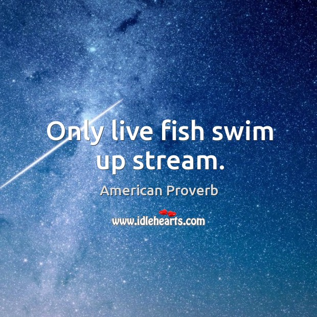 Only live fish swim up stream. American Proverbs Image