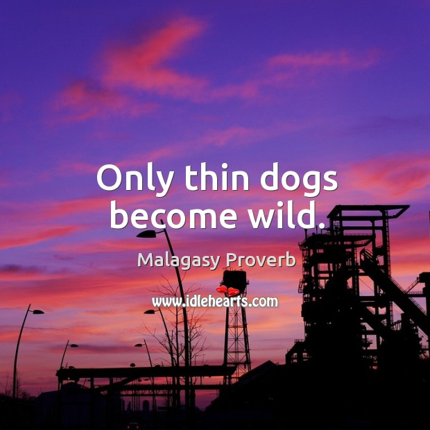 Only thin dogs become wild. Malagasy Proverbs Image