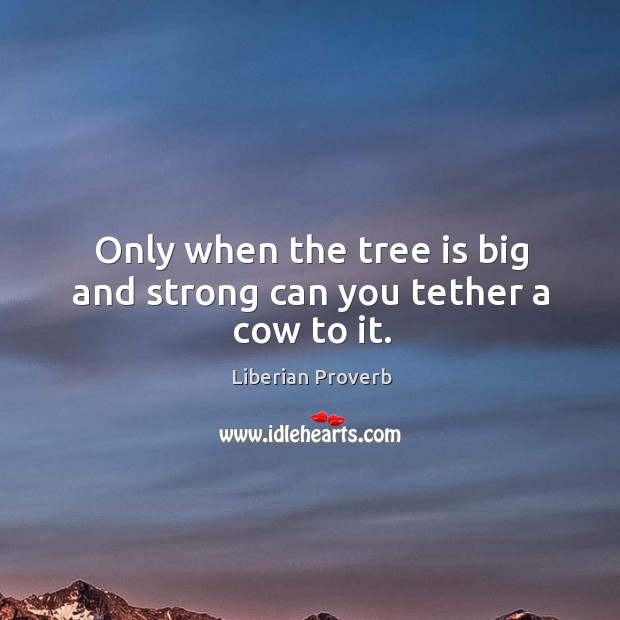 Only when the tree is big and strong can you tether a cow to it. Liberian Proverbs Image