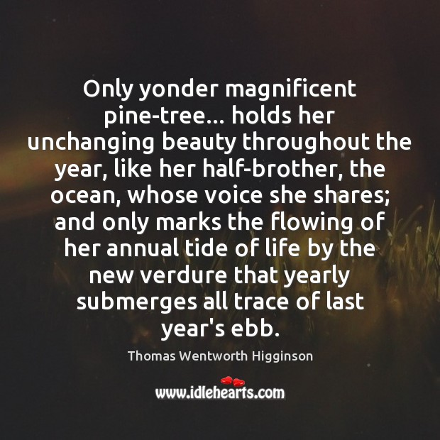 Only yonder magnificent pine-tree… holds her unchanging beauty throughout the year, like Thomas Wentworth Higginson Picture Quote