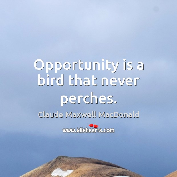 Opportunity is a bird that never perches. Image