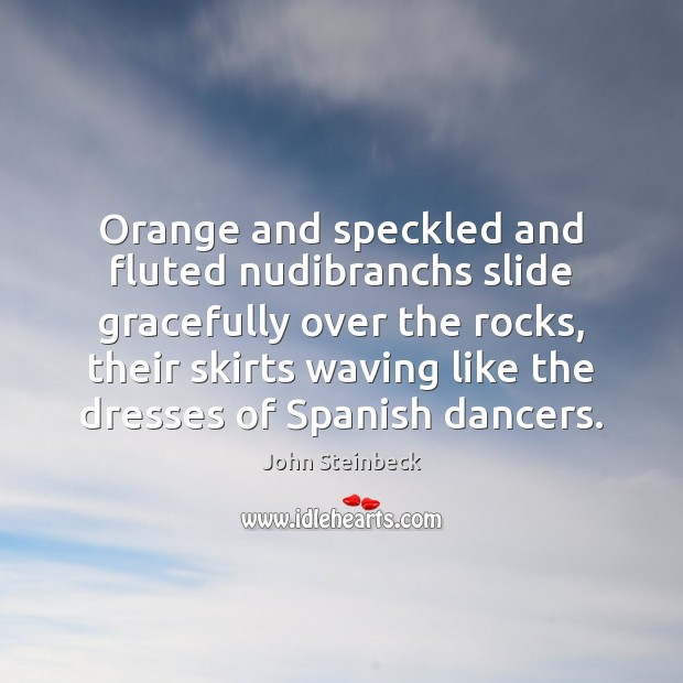 Orange and speckled and fluted nudibranchs slide gracefully over the rocks, their John Steinbeck Picture Quote