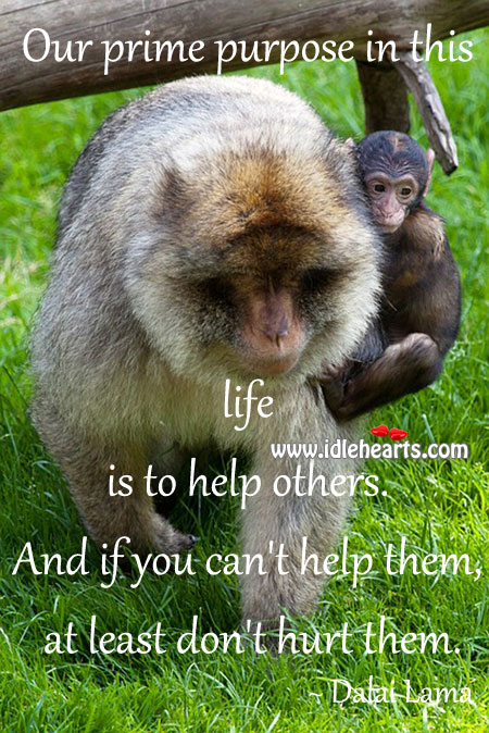 Our prime purpose in this life is to help others. Image