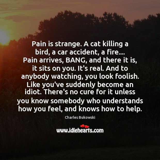 Pain is strange. A cat killing a bird, a car accident, a Image