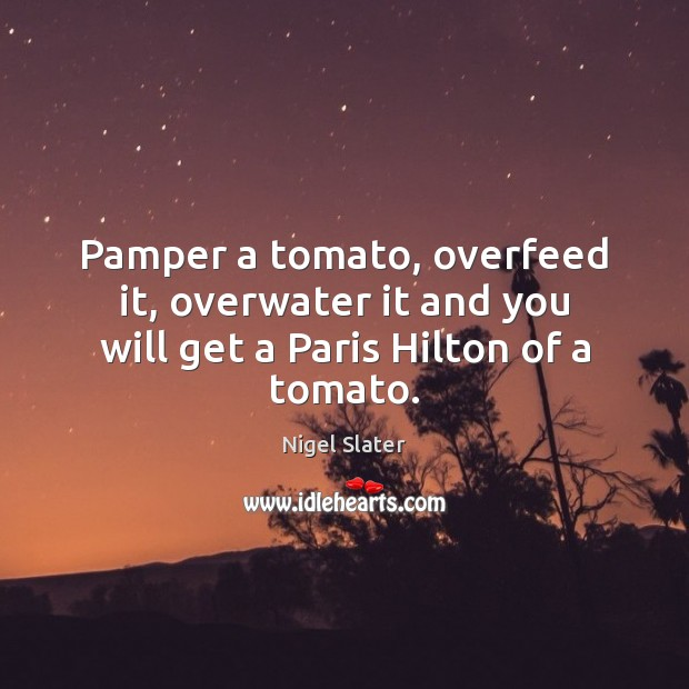 Pamper a tomato, overfeed it, overwater it and you will get a Paris Hilton of a tomato. Image