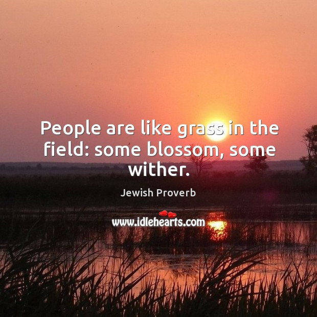 People are like grass in the field: some blossom, some wither. Jewish Proverbs Image