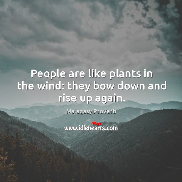 People are like plants in the wind: they bow down and rise up again. Malagasy Proverbs Image