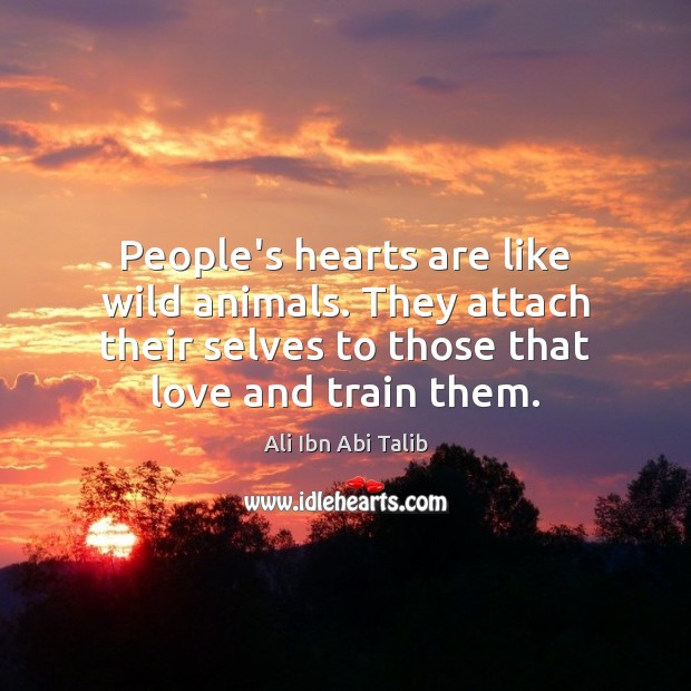 People's hearts are like wild animals. They attach their selves to those Ali Ibn Abi Talib Picture Quote