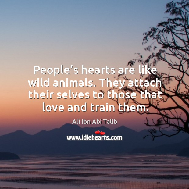 People's hearts are like wild animals. They attach their selves to those that love and train them. Ali Ibn Abi Talib Picture Quote