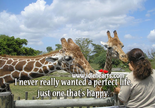 I never really wanted a perfect life Image