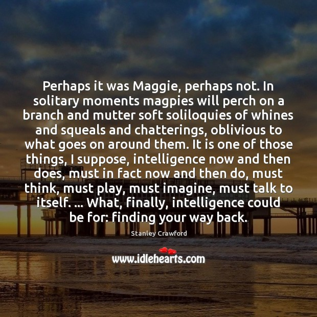 Perhaps it was Maggie, perhaps not. In solitary moments magpies will perch Stanley Crawford Picture Quote