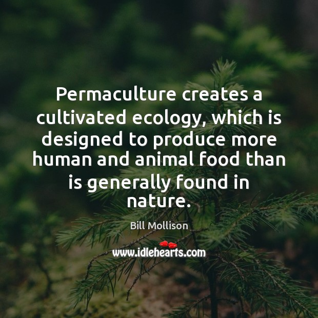 Permaculture creates a cultivated ecology, which is designed to produce more human Bill Mollison Picture Quote