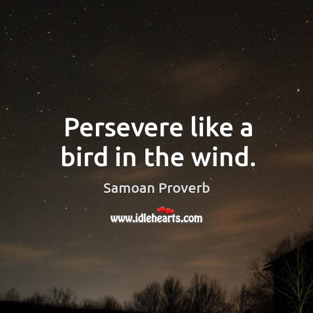 Persevere like a bird in the wind. Samoan Proverbs Image