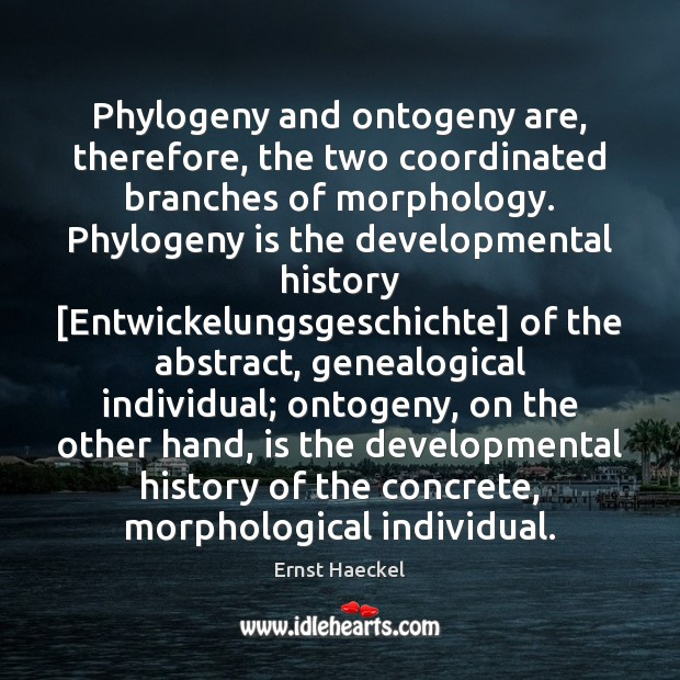 Image, Phylogeny and ontogeny are, therefore, the two coordinated branches of morphology. Phylogeny
