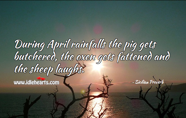 During april rainfalls the pig gets butchered, the oxen gets fattened and the sheep laughs. Sicilian Proverbs Image